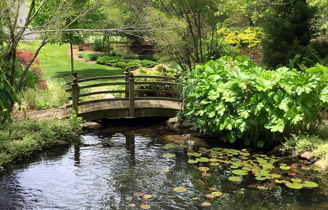 Garden bridge over pond