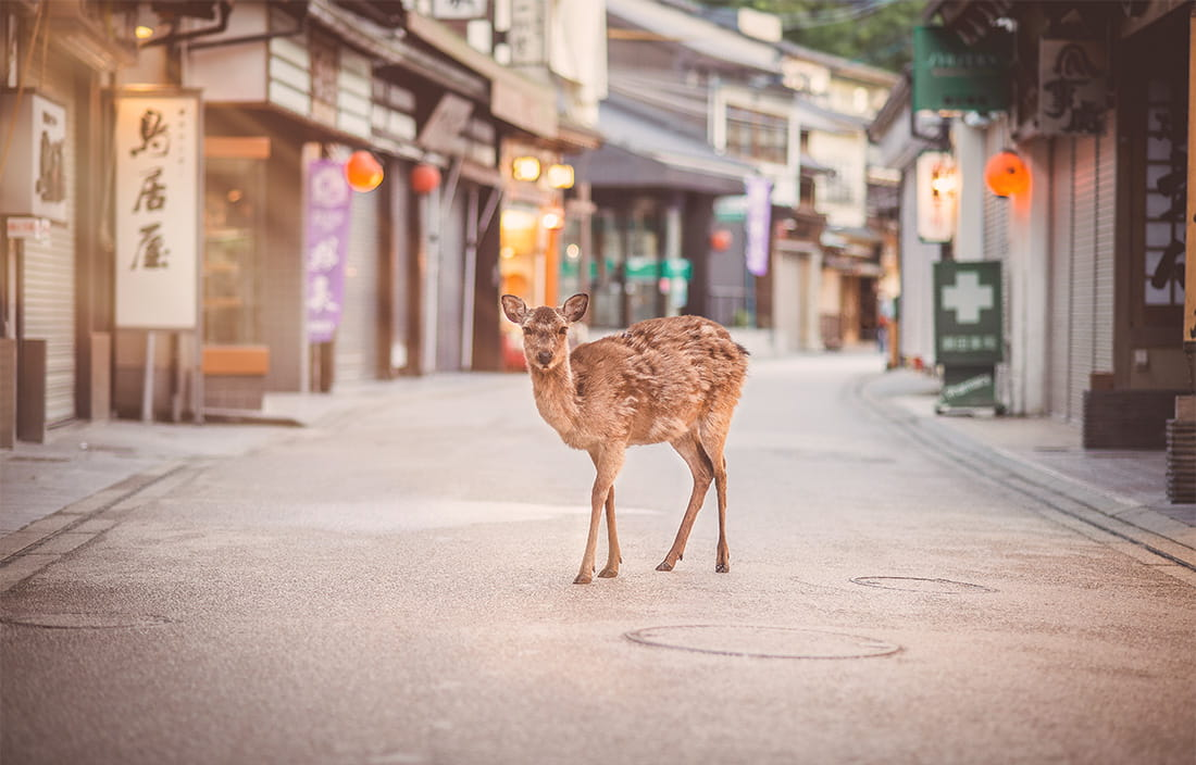 Young deer look out of place in a metropolitan shopping area