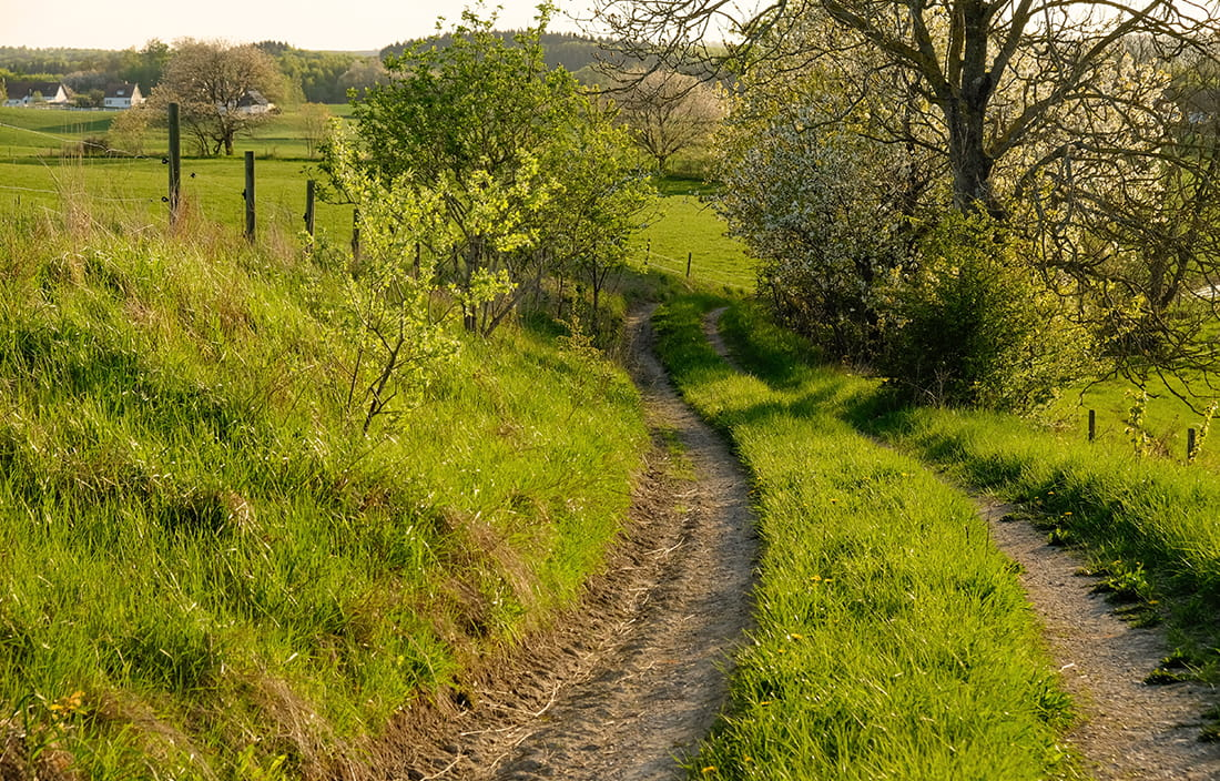 Image of a dirt road through green country pastures.