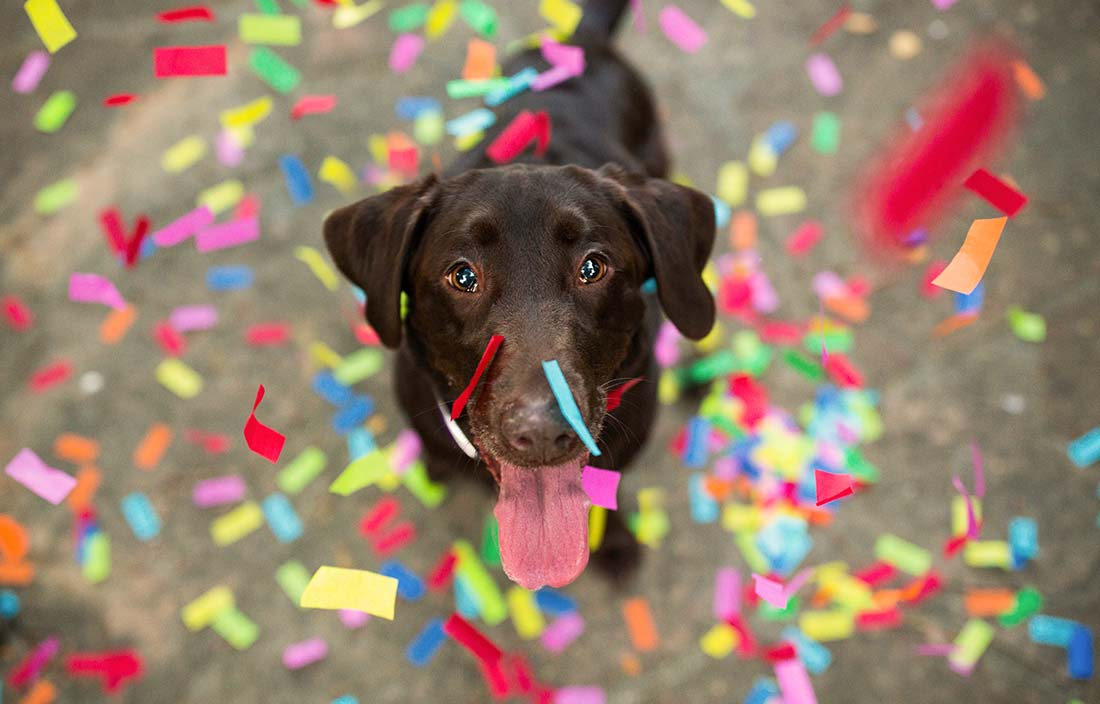 Picture of a dog looking up at the camera with confetti falling all around