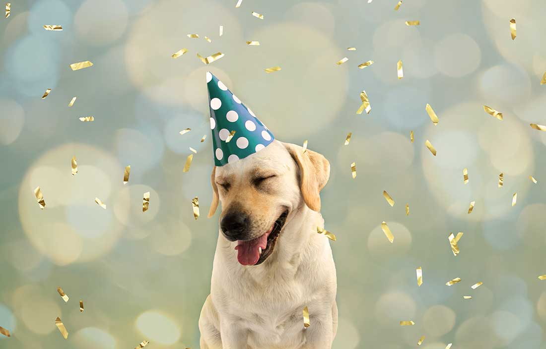 Happy-looking dog celebrating