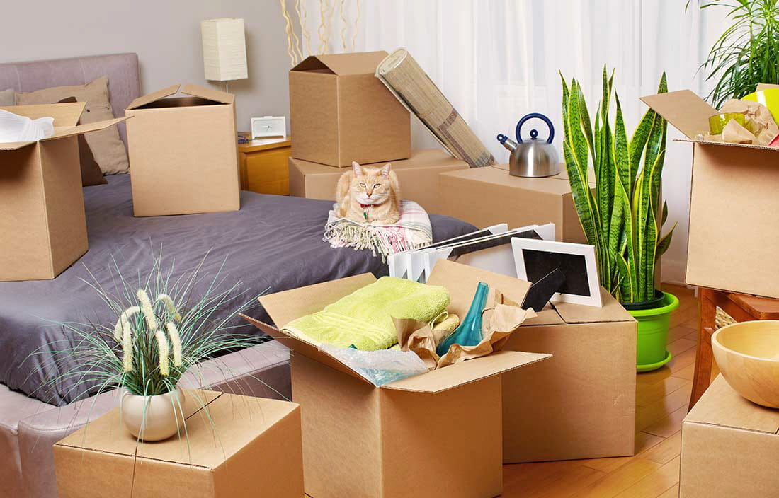 Image of packing to move into a senior living community
