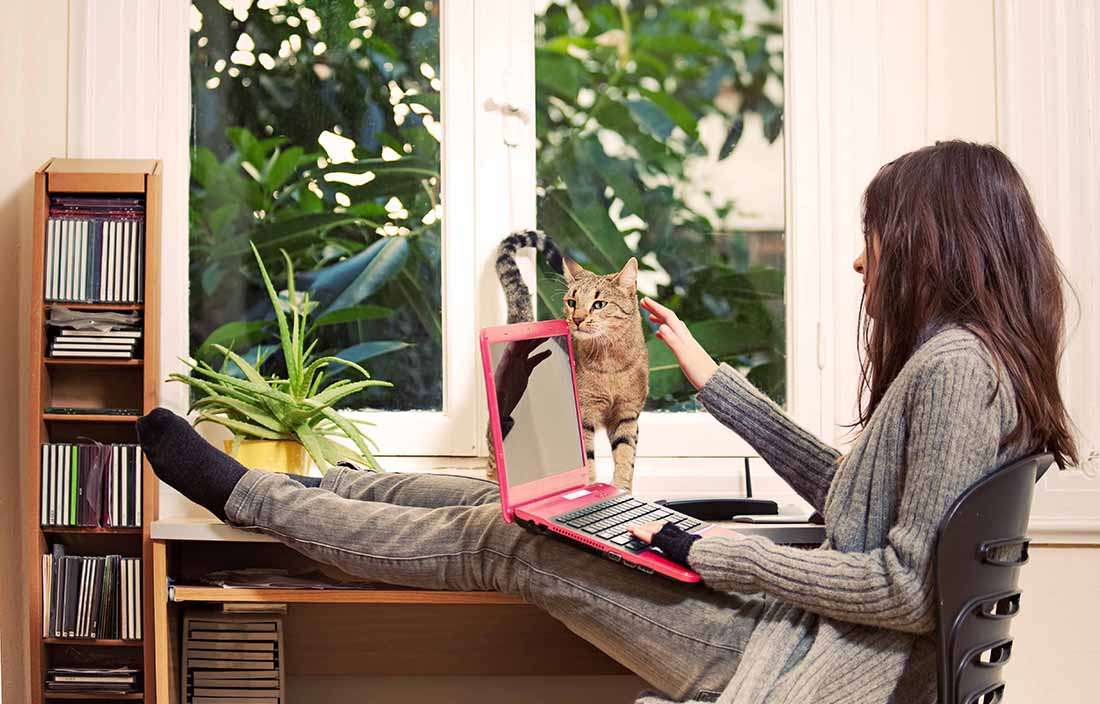 Woman sitting at her desk using a laptop computer petting her pet cat.